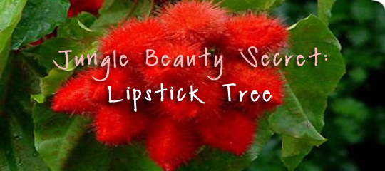Lipstick Tree Amazon e